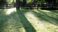morning shadows video