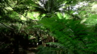 SLOW MOTION: Morning sun shining through big old lush fern jungle forest video