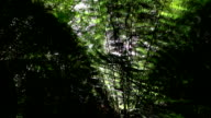 CLOSE UP: Morning sun shining through lush fern jungle forest in sunny summer video