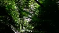 CLOSE UP: Morning sunbeam shining through lush fern jungle forest vegetation video