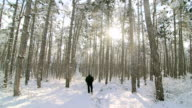 Morning walk in the winter woods video