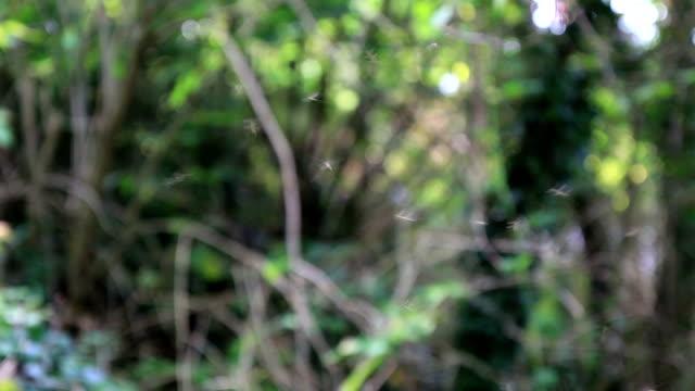 Mosquitos im Wald video