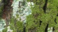 Moss on Tree video