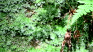Mosses and ferns in the wood video