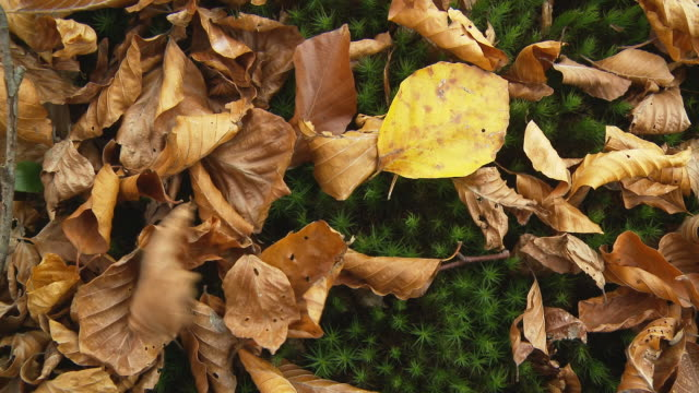 HD: Mossy Ground With Autumn Leaves video