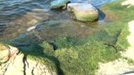 Mossy Rocks at Lake Shore video