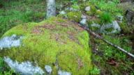 DOLLY SHOT: Mossy Stone video