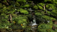 Mossy stream. Two shots. video