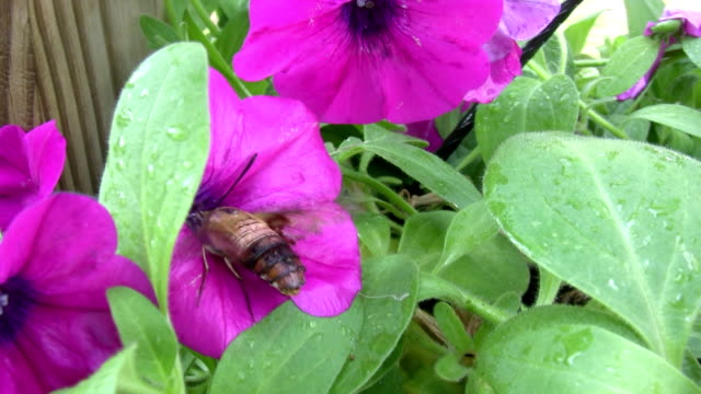 Moth Searching Flower video