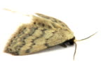 NTSC: Moth video