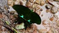 Moth video