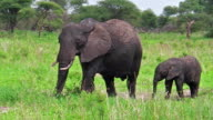 Mother and baby elephant video