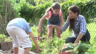 Mother And Children Working On Allotment Together video