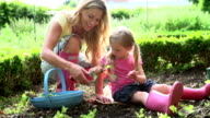 Mother And Daughter Picking Radish On Allotment video