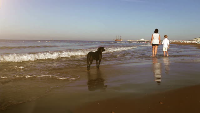 Mother and son walk along the seacoast being watched by a big black hound video