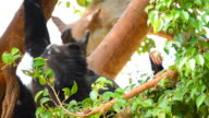 Mother and young chimpanzees video