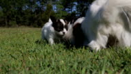 Mothering Puppies video