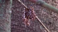 Moths Mating video