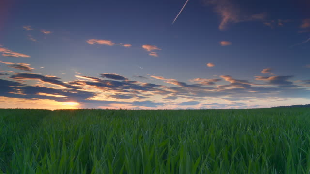 HD Motion Time-Lapse: Beautiful Sunset Over Field Of Wheat video