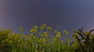 HD Motion Time-Lapse: Canola Plants Against Stars video