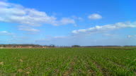 HD Motion Time-Lapse: Clouds Over Young Wheat video