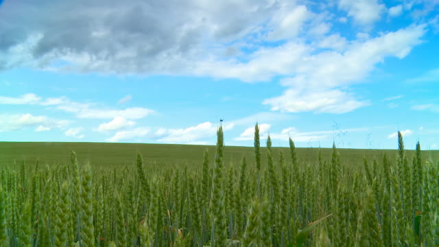 HD Motion Time-Lapse: Cloudscape Over Green Wheat Field video