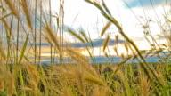 HD Motion Time-Lapse: Cloudscape Over The Landscape video