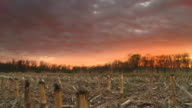 HD Motion Time-Lapse: Field Of Corn Stubble At Sunset video