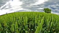 HD Motion Time-Lapse: Fish Eye Cloudscape Over Countryside video
