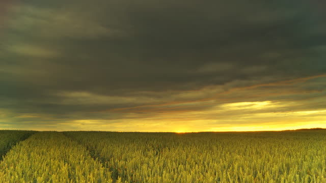 HD Motion Time-Lapse: Storm Over The Wheat Field video
