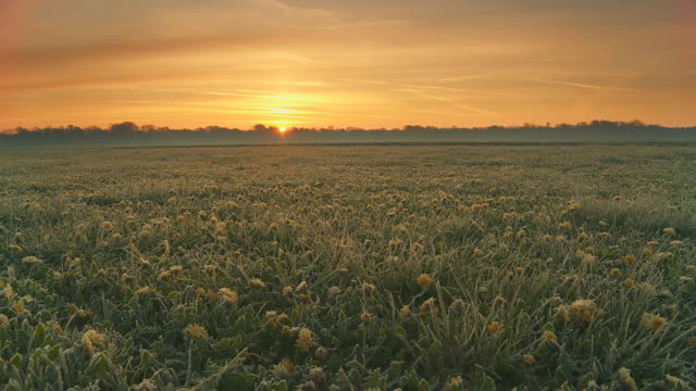 HD Motion Time-Lapse: Sunrise Over Field Of Dandelions video