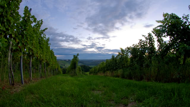 HD Motion Time-Lapse: Vineyard At Sunrise video