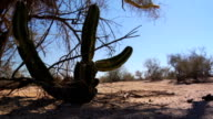 Motorbike ride past cactus dolly video