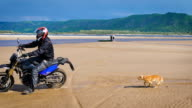 Motorcyclist rides on the sandy beach, running behind him cute and funny dog video