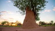 WS DS Mound-Building Termite video