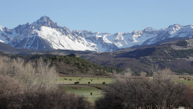 Mount Sneffels rises over ranch land and cattle herd Colorado video