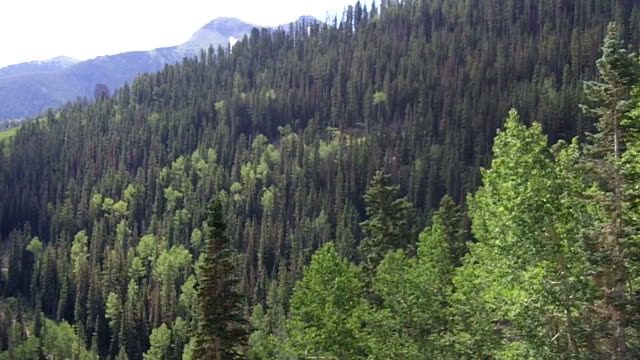 Mountain and  trees from Ski Gondola in Telluride video