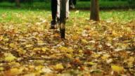 Mountain bike in the forest. Autum season. video