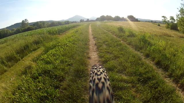 Mountain bike ride (HD) video