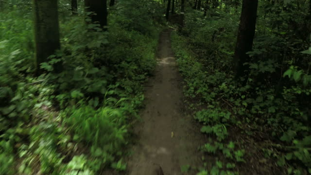 Mountain bike speed in a forest, personal perspective cycling. video