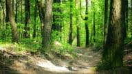 HD: Mountain Biker Downhill video