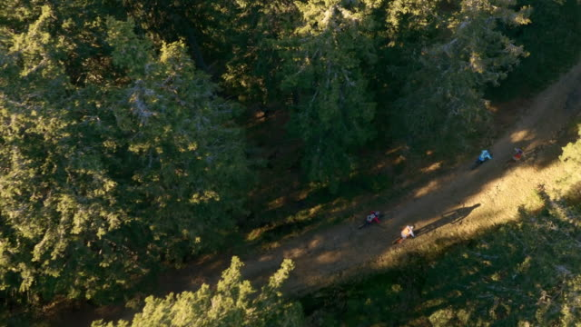 AERIAL Mountain bikers riding on a forest trail in sunshine video