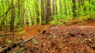 Mountain Biking Jump Forest Trail. Young Fit Man Rides Mountain Bike off Dirt Jump. Outdoor Active Summer Lifestyle. Steadicam Shot. video