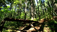Mountain Biking Jumps Sequence video