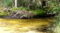 Mountain creek in Rainforest video