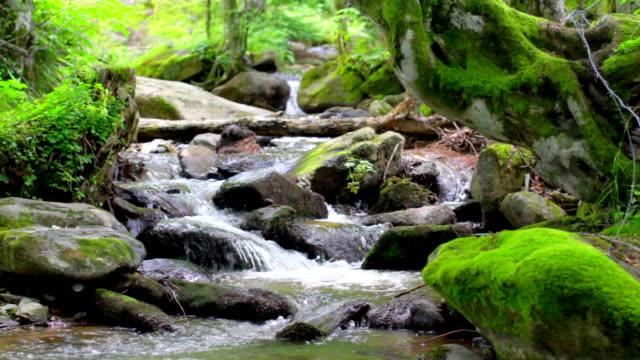 Mountain Creek with Small Waterfalls video