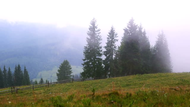 Mountain Forest Fog video