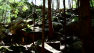 Mountain, forest landscape video
