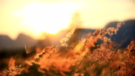 Mountain Grass Flowers Sunset On The Wind. video