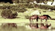 Mountain horses near lake video